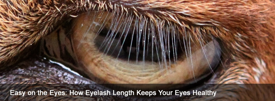 Easy on the Eyes: How Eyelash Length Keeps Your Eyes Healthy